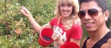 Blueberry Picking In Pautahanui