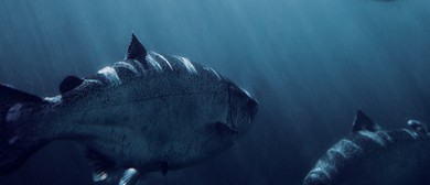 Matt Goes Wild in Marlborough