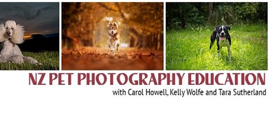 The Pet Posse Pet Photography Workshop