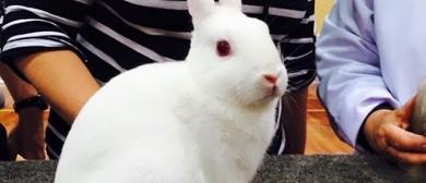 Canterbury Cavy & Rabbit Fanciers Assn: Rabbit Show