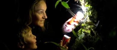 Glow In the Dark Glow-Worm Tour