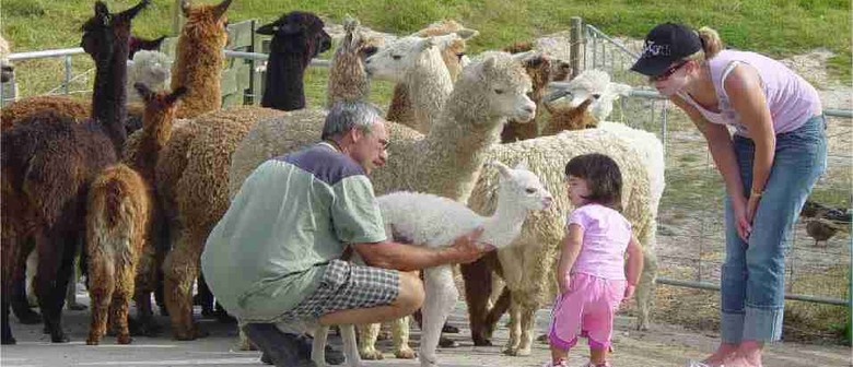 Alpaca Open Day