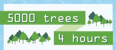 5000 Trees in 4 Hours