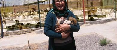 Fundraiser Bootcamp for Animal Shelter