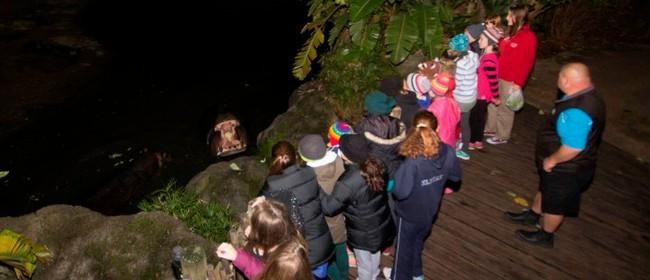 Public Safari Nights