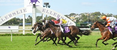 Macular Degeneration Charity Raceday featuring Avondale Cup