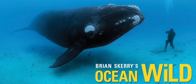National Geographic Live presents Ocean Wild