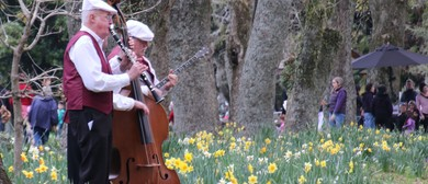 Daffodil Sundays