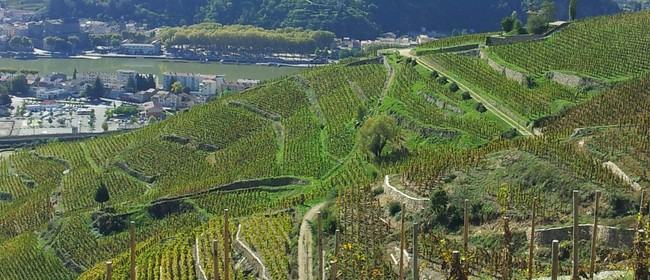Explore Wines of Tain Hermitage - Rhone France