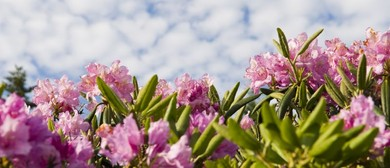 Rhododendron Care Workshop