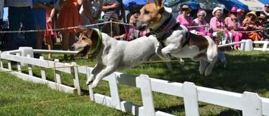 Terrier Racing Day 2016