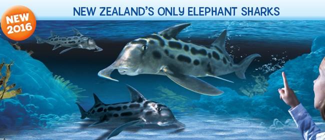 Meet Our Elephants: A New Zealand First