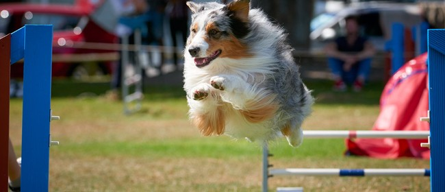 Blenheim Canine Training Club Agility Jumpers Champ Show