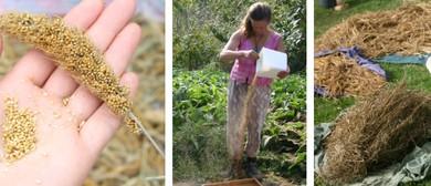 Bio-Regional Seed Bank Internship
