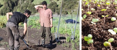 Spring Internship - Growing Soil, Food & Health