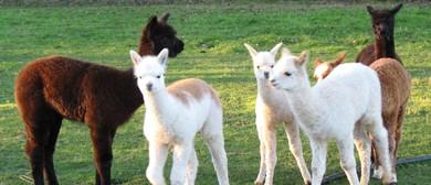 National Alpaca Day