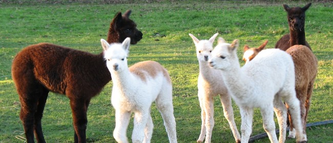 National Alpaca Day