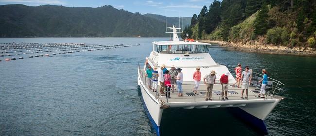 Picton - Havelock Cruise