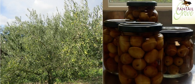 Pick Your Own Pickling Olives and Demo
