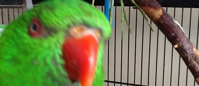 Wairarapa Bird Club