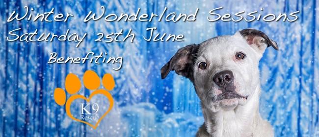 Winter Wonderland Pet Photography Fundraiser