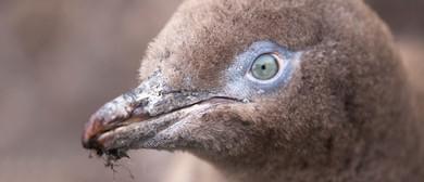 2016 Otago Wildlife Photography Exhibition