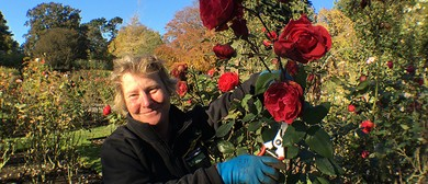 Curators' Sessions - Hands-on Rose Pruning
