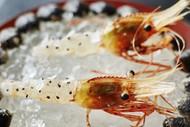 Ants On a Shrimp: Noma In Tokyo