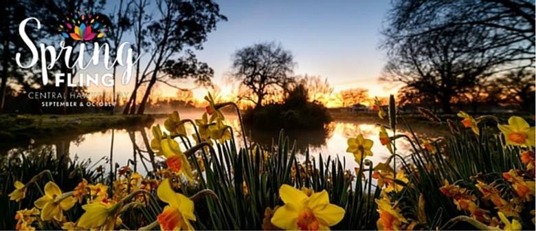 Dawn in the Daffodils
