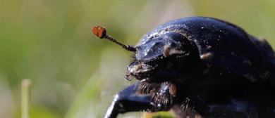 A Beetle Abroad