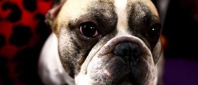 Rotorua Kennel Association Annual Conformation Dog Show
