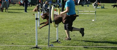 Blenheim Canine Training Club Agility & Jumpers Champ Show