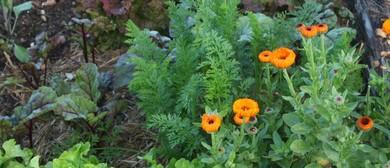 Spring Veg StartUp Garden Workshop