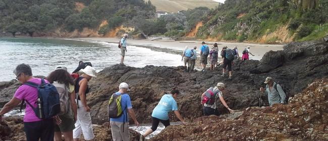 Free Ranger Guided Walk - Waiti Bay to Tawhitokino