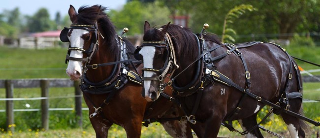 Pirongia Clydesdales Horse Ploughing Day