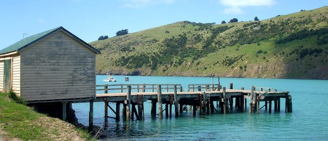 Historical Okains Bay Beach and Wharves - 2 Hour Walk