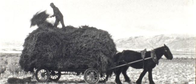 Reel Life In Rural New Zealand