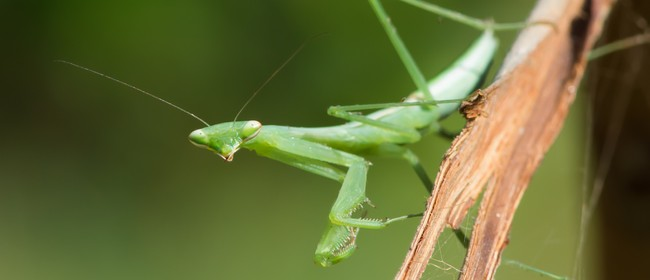 The Wonderful, Wonderful World of Insects