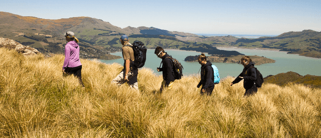 Lyttelton Crater Rim - 4 Hour Walk