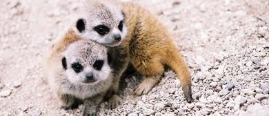 Wellington Zoo Wild Start Programme