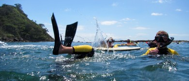 Hahei East Community Guided Snorkel Day