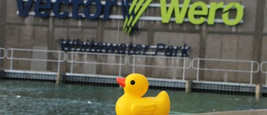 The Great Auckland Duck Race & Salmon Run