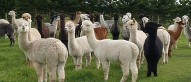 Alpaca Open Weekend