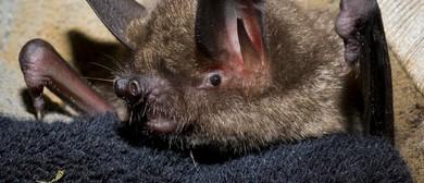 Birds, Bats and Banana Splits