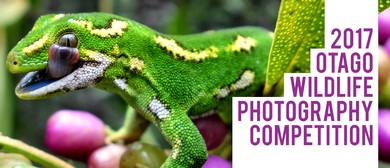 Otago Wildlife Photography Competition