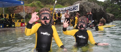 Community Guided Snorkel Days - Reotahi Summer Series