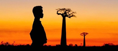 Baobabs between Land and Sea (film)