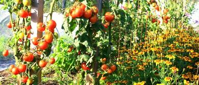 The Abundant Veggie Patch