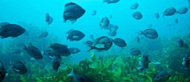 Seaweek - Kapiti Marine Reserve: Past, Present and Future