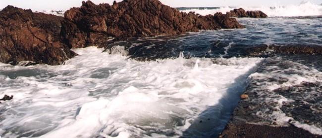 Seaweek - Moa Point Treatment Plant Tours
